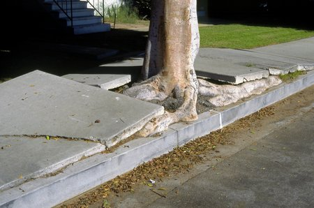 tree crack concrete